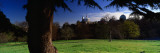 Trees in a Park, Royal Observatory, Greenwich, England, United Kingdom Wall Decal by  Panoramic Images