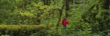 Man Walking in a Rainforest, Olympic National Park, Washington State, USA Wall Decal by  Panoramic Images
