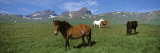 Horses in a Meadow, Dvrfioll Mountain, Borgarfjordur, Iceland Wall Decal by  Panoramic Images