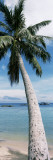 Palm Tree on the Beach Wall Decal by  Panoramic Images
