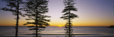 Silhouette of Trees at Dawn, Manly Beach, Sydney, New South Wales, Australia Wall Decal by  Panoramic Images