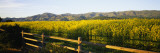 Crops in a Field, Napa Valley, California, USA Wall Decal by  Panoramic Images
