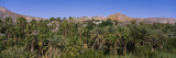 Palm Trees at the Hillside, Baja California, Mexico Wall Decal by  Panoramic Images