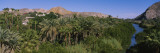 Palm Trees in the Forest, Mulege, Baja California, Mexico Wall Decal by  Panoramic Images