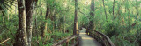 Boardwalk at Big Cypress Bend, Fakahatchee Strand State Preserve, Florida, USA Wall Decal by  Panoramic Images