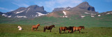 Horses Standing and Grazing in a Meadow, Borgarfjordur, Iceland Wall Decal by Panoramic Images