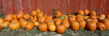 Pumpkins near the Wooden Fence Wall Decal by Panoramic Images
