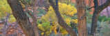 Cottonwood Trees in a Forest, Escalante National Park, Utah, USA Wall Decal by  Panoramic Images