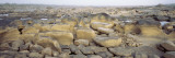 Rocks at a Dry Riverbed, Susquehanna River, Pennsylvania, USA Wall Decal by  Panoramic Images