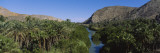 River Running through a Forest, Mulege, Baja California, Mexico Wall Decal by  Panoramic Images