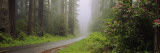 Empty Road Passing through a Forest, Redwood National Park, California, USA Wall Decal by Panoramic Images
