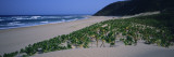 Plants on the Beach, Kwazulu-Natal, South Africa Autocollant mural par  Panoramic Images