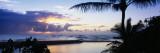 Palm Tree on the Beach, Wailua Bay, Kauai, Hawaii, USA Wall Decal by  Panoramic Images
