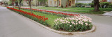 Tulips on a Street, Holland, Michigan, USA Wall Decal by  Panoramic Images