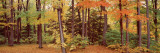 Autumn Trees in a Forest, Chestnut Ridge Park, New York, USA Wall Decal by  Panoramic Images