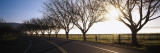 Trees along a Highway, Napa Valley, California, USA Wall Decal by  Panoramic Images