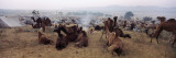 Camels in a Desert, Pushkar Camel Fair, Pushkar, Rajasthan, India Wall Decal by  Panoramic Images