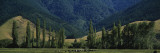 Cows Grazing in a Field, Nelson, South Island, New Zealand Wall Decal by  Panoramic Images