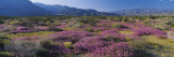 Flowers on a Landscape, Anza Borrego Desert State Park, California, USA Wall Decal by  Panoramic Images