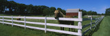 Horse Peeking over a Fence on a Farm, Kent County, Michigan, USA Wall Decal by  Panoramic Images