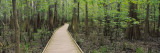 Boardwalk Passing through a Forest, Congaree National Park, South Carolina, USA Wall Decal by  Panoramic Images