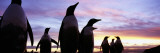 Silhouette of a Group of Gentoo Penguins, Falkland Islands Wall Decal by  Panoramic Images