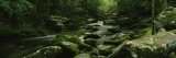 River Running Through a Forest, Cosby Creek, Great Smoky Mountains National Park, Tennessee, USA Wall Decal by  Panoramic Images