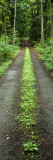 Lush Foliage Lining a Wet Driveway, Bainbridge Island, Washington, USA Wallstickers af Panoramic Images