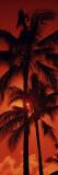 Palm Trees at Dusk, Kalapaki Beach, Kauai, Hawaii, USA Wall Decal by  Panoramic Images