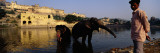 Two Elephants in Water, Amber Fort, Jaipur, Rajasthan, India Wall Decal by  Panoramic Images