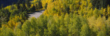 Aspen Trees on Highway 145, Telluride, Colorado, USA Wall Decal by  Panoramic Images