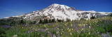 Snowcapped Mountain on a Landscape, Mt Rainier, Mt Rainier National Park, Washington, USA Wall Decal by  Panoramic Images