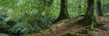 Trees in the Forest, Aberfeldy, Perthshire, Scotland Wall Decal by  Panoramic Images