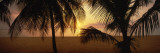 7-Mile Beach at Sunset, Negril, Jamaica Wall Decal by  Panoramic Images