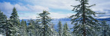 Snow Covered Trees on Mountainside, Lake Tahoe, Nevada Wall Decal by  Panoramic Images
