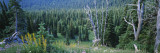 Trees in a Forest, Olympic National Park, Washington, USA Wall Decal by  Panoramic Images