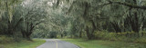 Oak Trees on Both Sides of a Road, Florida, USA Wall Decal by  Panoramic Images