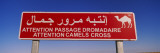 Camel Crossing Signboard, Douz, Tunisia Wall Decal by  Panoramic Images