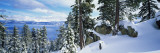 Snow Covered Trees on Mountainside, Lake Tahoe, Nevada, USA Autocollant mural par Panoramic Images