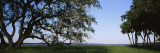 Trees in a State Park, Myakka River State Park, Sarasota, Florida, USA Wall Decal by  Panoramic Images