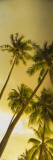 Palm Trees in French Polynesia Wall Decal by  Panoramic Images