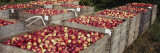 Heap of Apples in Wooden Crates, Grand Rapids, Kent County, Michigan, USA Wall Decal by  Panoramic Images