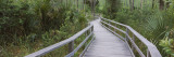 Boardwalk Passing through a Forest, Corkscrew Swamp Sanctuary, Naples, Florida, USA Wall Decal by  Panoramic Images