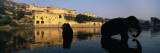 Silhouette of Two Elephants in a River, Amber Fort, Jaipur, Rajasthan, India Wall Decal by  Panoramic Images