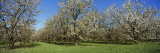 Cherry Trees in an Orchard, Leelanau Peninsula, Michigan, USA Wall Decal by  Panoramic Images