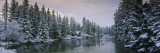 Evergreen Trees Covered with Snow, Policeman's Creek, Canmore, Alberta, Canada Wall Decal by  Panoramic Images