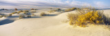 Desert Plants in White Sands National Monument, New Mexico, USA Wall Decal by  Panoramic Images