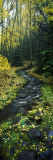 Stream Flowing Through Forest Wall Decal by  Panoramic Images