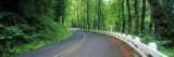 Winding Road Through Forest Wall Decal by  Panoramic Images