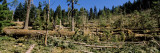 Trees in a Forest, South Fork, Trinity County, California, USA Wall Decal by  Panoramic Images